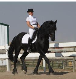 Jelle - Stallion - Imported FSP 1st Premium VB Ster 16.1 hh born 2003